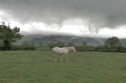 Cheval par temps orageux