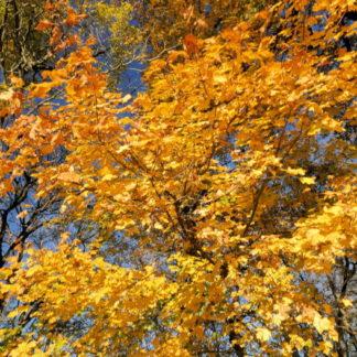 Feuilles d'automne en travelling vertical