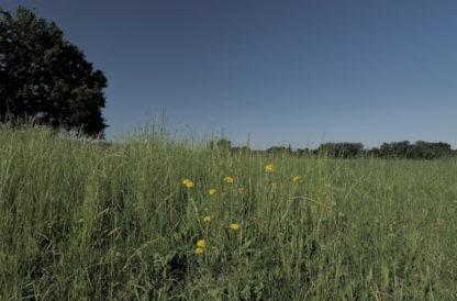 Gros plan sur herbes et fleurs