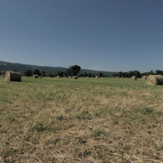 Panoramique droite-gauche sur champ avec balles de foin