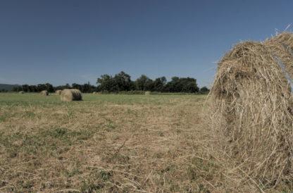 Panoramique gauche-droite sur champ avec balles de foin
