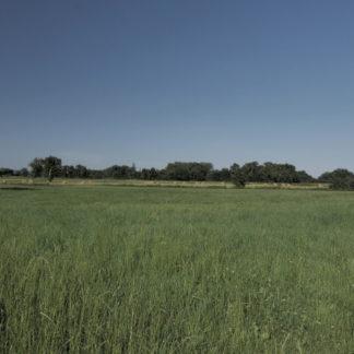 Panoramique sur champ en été