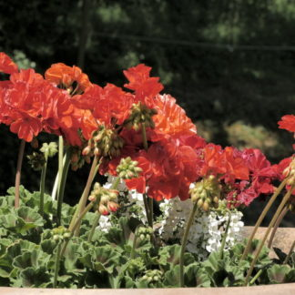 Plan fixe fleurs