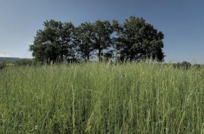 Plan fixe sur herbes et arbres