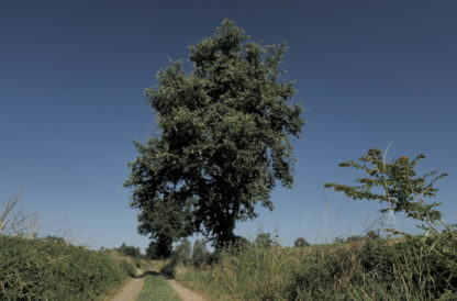 Travelling vertical sur arbre
