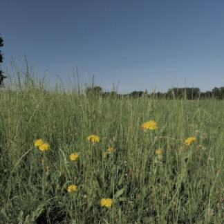 Très gros plan sur herbes et fleurs