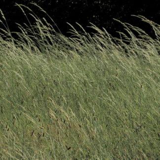 Plan fixe herbes sous le vent