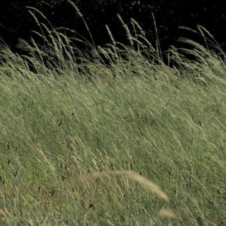 Plan fixe herbes sous le vent fort