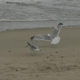 Mouettes sur les plage